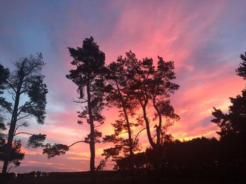 medžiai,spalvingas dangus,šviesus,saulėlydis,siluetas,rožinis dangus