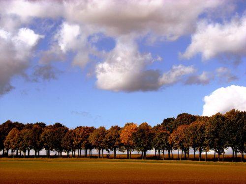 medžiai,serijos,ruduo,dangus,debesys,aukso ruduo,nuotaika,lapai