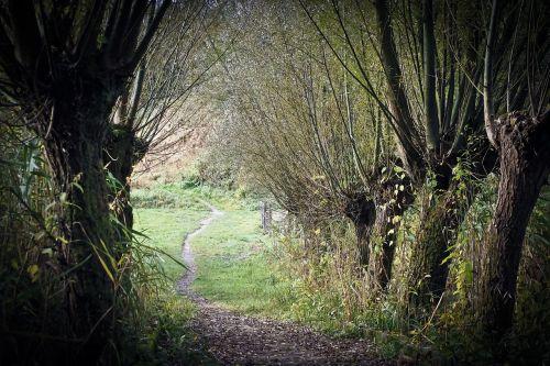 medžiai,ganyti,gamta,verkianti gluosniai,filialai,pintys,abendstimmung,senas,nuotaika,Kahl,toli,kraštovaizdis,kelias,samanos,žygiai,žalias,miškas,ruduo,idiliškas,ištemptas,takas,mediena,miško takas,poilsis,idilija,vaikščioti,gamtos takas,niūrus,Hansonas,mistinis