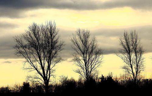 medžiai,dangus,pilka,ruduo,Kahl,debesys,kraštovaizdis,dengtas dangus