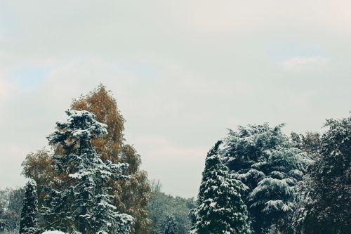 medžiai,ruduo,žiema,sniegas,gamta,kraštovaizdis,lapai,šaltas,poilsis,spygliuočiai,snieguotas