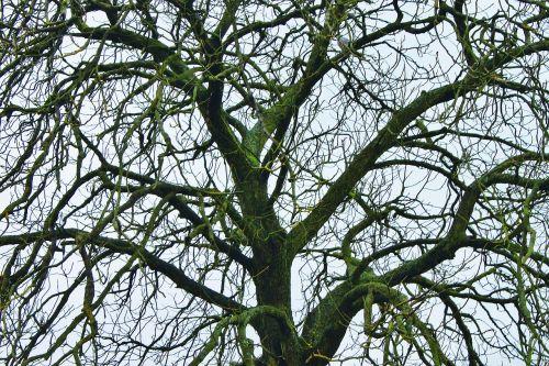medžiai,žiema,gamta,retas,plikas,šaltas,kaimas,vienatvė,filialas,vaizdingas,lapuočių,aplinka,nevaisinga,bagažinė,ekologija,eco,botanikos