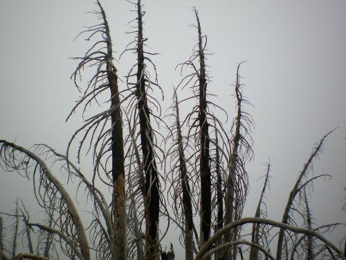 medžiai,filialai,dangus,baisus,gamta,mirę medžiai,miglotas