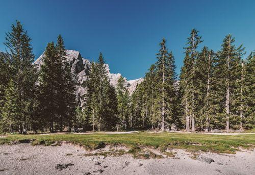 medžiai,miškas,gamta,kraštovaizdis,kalnai,tapetai,hd tapetai,gamtos tapetai