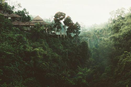 medžiai,namas,gamta,vaizdas,žalias,miškas,atostogos,terasa,bagažinė,nuotykis,kelionė,kelionė,nipa