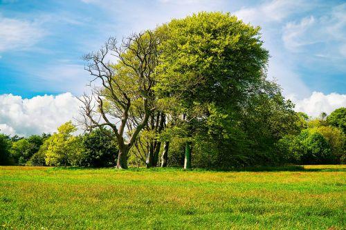medžiai,medis,žolė,laukas,žalias,lauke,gamta,kraštovaizdis,sodas,vasara