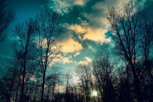 medžiai,plikas medžiai,žiemos medžiai,plikas filialus,siluetas,debesys,aukso debesys,aukso švytėjimas,dusk,saulėtas vakaras