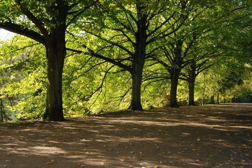 medžiai,šešėliai,žalias,šešėlis,lapinės,mediena