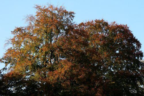 medžiai,rudens nuotaika,rudens šviesa,atsiras,ruduo