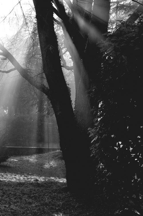 medžiai,saulės šviesa,šešėliai,gamta,šviesa,medis,kraštovaizdis,saulėlydis,aušra,saulės šviesa,augalas,ruduo,popietė
