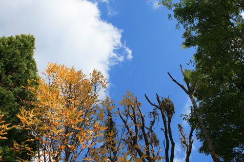 medžiai, žalias, geltona, ruduo, debesis, medžiai prieš dangų