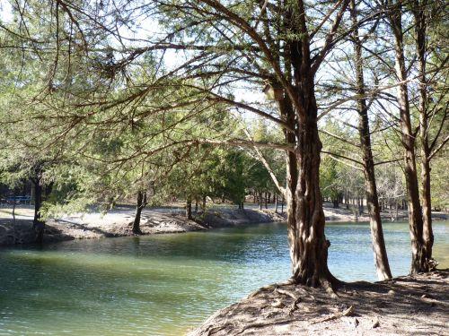 medžiai, vanduo, šviesti, lauke, diena, medžiai palei vandenį