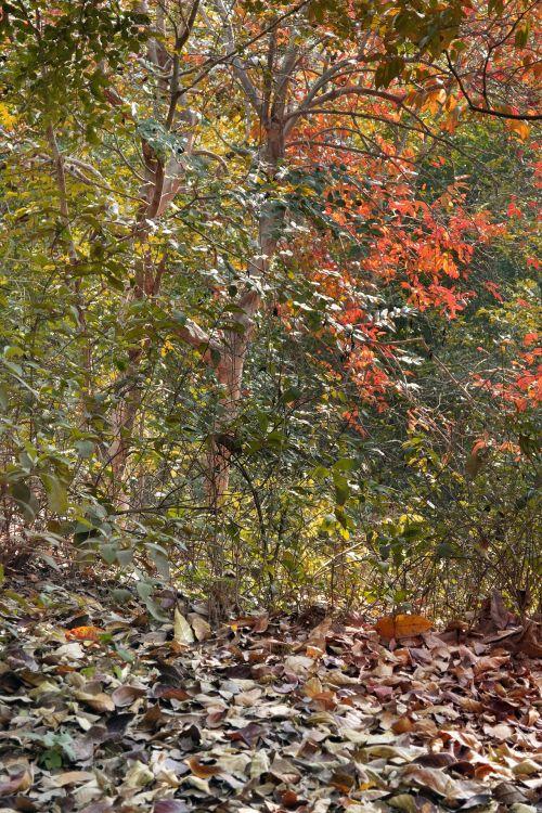 lapai, medžiai, spalva, ruduo, gamta, medžiai ir žalumynai 4