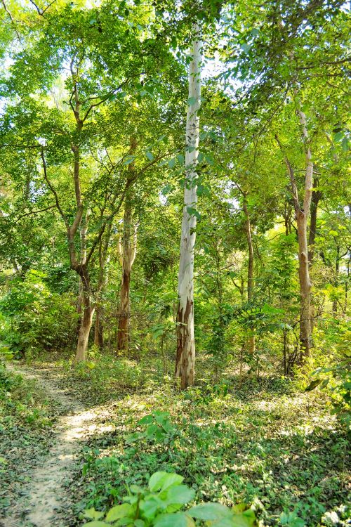medžiai, miškas, lapija, šviesa, gamta, medžiai ir žalumynai 6