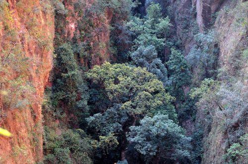 medžiai, lapija, miškas, žalias, gamta, lapai, medžiai ir miškai 8