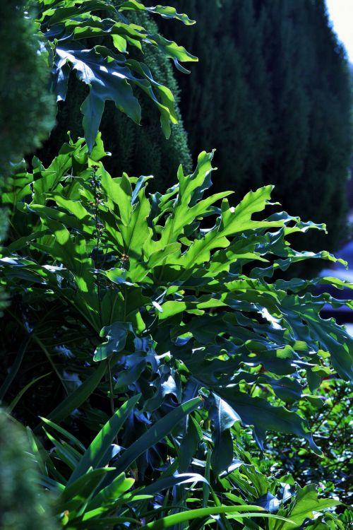 medžiai, spygliuočiai, augalai, paparčiai, žalias, medžiai ir augalija