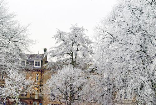 žiema, sniegas, sezonai, šaltas, šaltis, sušaldyta, filialas, filialai, medis, medžiai & nbsp, kraštovaizdis, gamta, fonas, gražus, medžiai ir žiemos sezonai