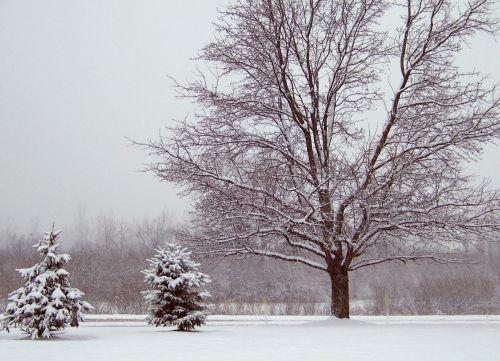 sniegas, visžalis, medžiai, Kalėdos, xmas, žiema, sniego medžiai