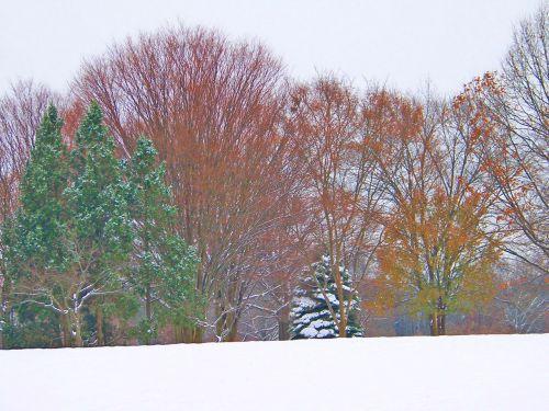 medžiai, sniegas, Kalėdos, xmas, žiema, filialai, galūnės, sniego medžiai