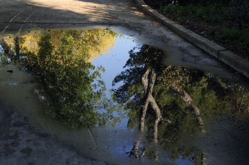 atspindys, vanduo, atspindėti, medžiai, lietus, gražus, medžiai atsispindi vandenyje