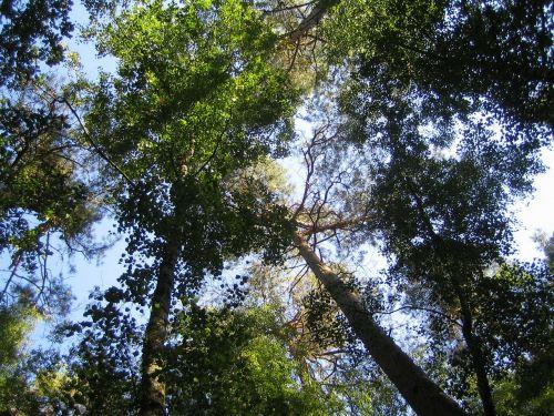 trejetas,gamtos takas,miškas,gamta