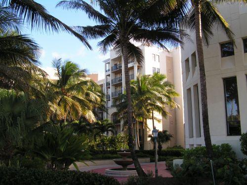 atogrąžų, sala, viešbutis, kurortas, paplūdimys, delnas, medžiai, puerto & nbsp, rico, atogrąžų viešbučio kurortas