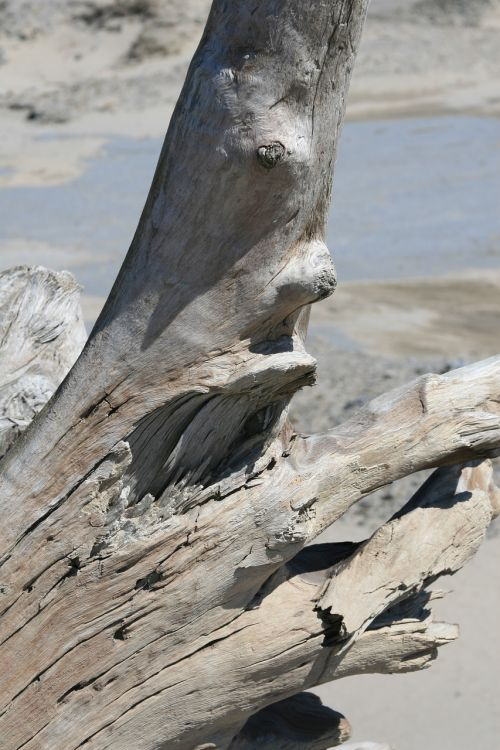 bagažinė,medis,papludimys,driftwood