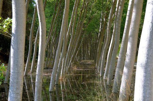 lagaminai,paprikos,medžiai,kamieniniai medžiai,medžio kamienas,gamta