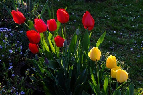 tulpės,gėlės,tulpių jūra,gėlių jūra,blütenmeer,geltona,raudona,pavasaris,Balandis,North Park,Diuseldorfas,Vokietija,tulpine lova,ryškios spalvos,spalvinga,farbenpracht,žydėti,sodas,tulpių laukas,geliu lova,žiedas,žydėti,tulpenbluete,spalvinga,spalva,kūrimas