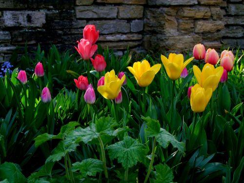 tulpės,gėlės,tulpių jūra,gėlių jūra,blütenmeer,geltona,pavasaris,Balandis,North Park,Diuseldorfas,Vokietija,tulpine lova,ryškios spalvos,spalvinga,farbenpracht,žydėti,parkas,tulpių laukas,geliu lova,žiedas,žydėti,tulpenbluete,spalvinga,spalva
