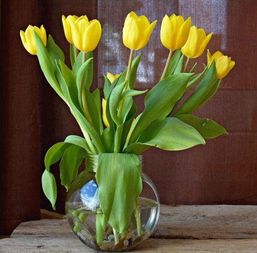 tulpės,gėlės,geltonos gėlės,skintos gėlės,pavasario gėlės,puokštė,geltona,pavasaris,vazos,stiklo vazos