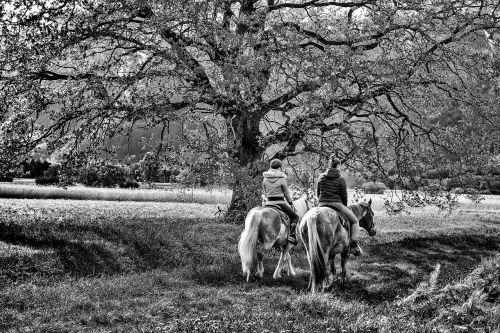 du,2,medis,arklys,parodė du,gamta,gyvūnų pasaulis,laisvalaikis,miškas,rudens miškas,harmonija,kartu,ruduo,ryto šviesa,mistinis