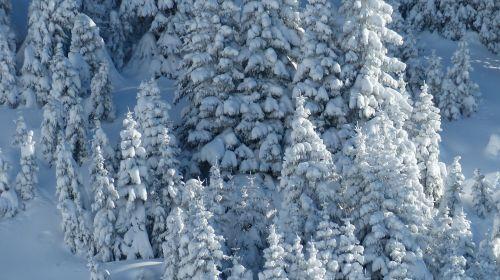 Tyrol, Tannheimer Tal, Žiema, Slidinėjimas Atokioje Pakrantėje, Sniego Kraštovaizdis, Medžiai, Miškui, Šaltas, Ledinis, Ledinis, Snieguotas