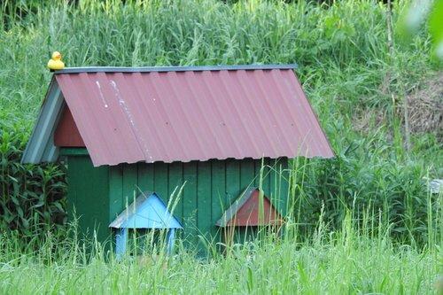 ul, bitynas, bitės, poveikį paskirstymui, bitininkystė, bičių, vabzdys, bitininkystė