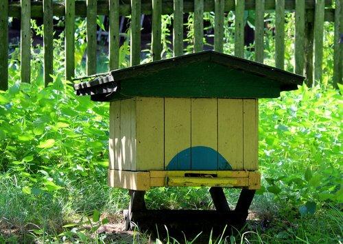 ul, bitininkystė, medus, vabzdys, bitininkystė, surinkti, Sodas, vasara, bitės