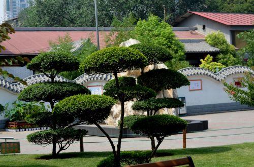 medis, medžiai, augalas, skulptūra, skėtis, kraštovaizdis, gamta, skėtinės medžiai