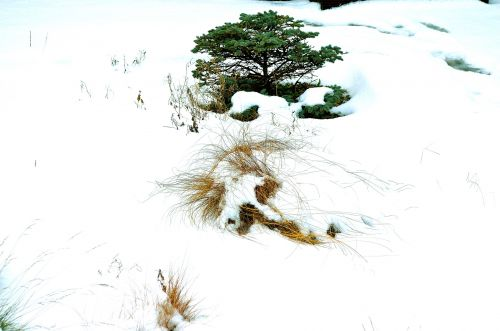 sniegas, šaltas, sezonas, medis, žolė, apdaila, sodas, fonas, pieva, gamta, po sniegu