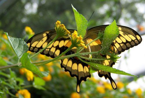 pagal, po, drugelis, vasara, vabzdys, sparnai, gėlė, po drugeliu