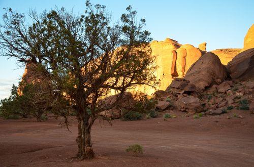 usa,amerikietis,pietvakarius,Laukiniai vakarai,kraštovaizdis,paminklo slėnis,Utah,colorado plato,Navajo,Navajo tauta,stalo kalnas,dykuma,smėlis,lankytinos vietos,akmeniniai bokštai,usa vakarai,uolos,indėnai,rausvai,gamta,medis,sausas