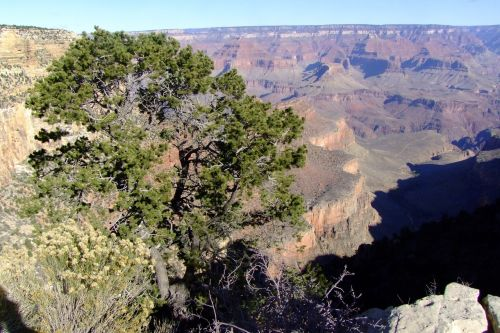 Usa, Didysis Kanjonas, Didysis Kanjonas, Kraštovaizdis, Gamta, Akmenys, Vaizdas, Kanjonas