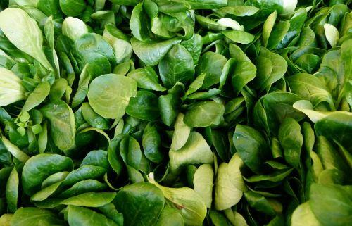 Valerianella locusta, kukurūzų salotos, paprastoji cornsalad, ėrienos salotos, mâche, fetticus, riešutų salotos, lauko salotos, Rapunzel, šviežias, lapai, turgus