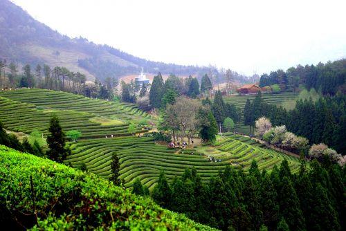 slėnis, kalnas, kalnas, gamta, kelionė, Boseong, žaliosios arbatos plantacija, kraštovaizdis, priemiesčiuose, peizažas, be honoraro mokesčio