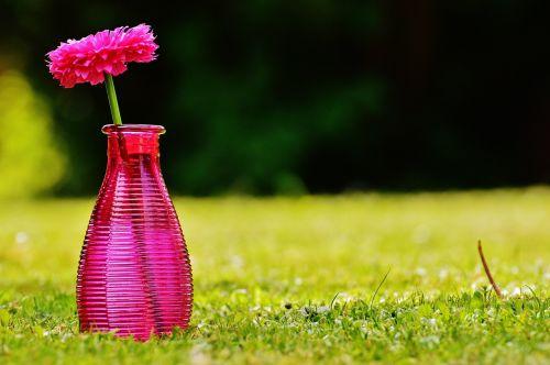 vazos,stiklas,gėlė,apdaila,rožinis,skaidrus,deko,trapi,dekoblumas