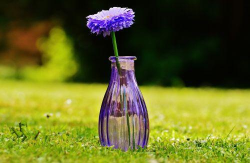 vazos,stiklas,gėlė,apdaila,violetinė,skaidrus,deko,trapi,dekoblumas