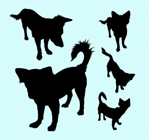 vektorius,siluetas,šuo,žinduolis,fauna,šunų mėgėjai,gyvūnų mėgėjai,gyvūnėlių parduotuvė,kelti,stovintis,kelia,simbolis,logotipas,piktograma,talismanas,nustatyti,paketas,rinkimas,Iliustracijos,meno,izoliuotas,elegantiškas,elegancija,mielas,juoda,juokinga,lipduko dizainas,populiarus,tendencija,išsamiai,naudinga,Saunus,stilius,ženklas,šunys,šuniukas,gyvūnas,naminis gyvūnėlis,mažai,mažas,linksmas,Vokiečių aviganis,kilmės,charakteris,grynakraujis,vidaus,žavinga,kailis,uodega,lygus,kreivė,nemokama vektorinė grafika