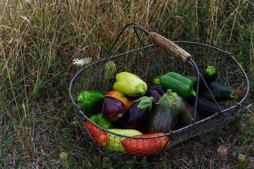 daržovės,krepšelis,ekologiškos daržovės,galia,bio,derlius,daržovių sodas,sodas,pomidorai,Baklažanas,cukinija,pipirai