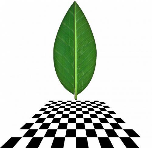 šaškių lentelė, vertikalus, perspektyva, žalias, lapai, balta & nbsp, fonas, vertikali perspektyva