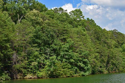 žvilgsnis į krantą iš valties,Tennessee upė,Tennessee,usa,medžiai,augalas,debesys,upė,gamta,kraštovaizdis
