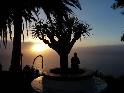 požiūris,poilsis,atsigavimas,pertrauka,turistų informacija,žmogus,asmuo,atsipalaidavimas,samoga,el sauzal,kranto,Tenerifė,Kanarų salos,saulėlydis,drakonas medis,drakonas medis-agavas,Agave attenuata,agavė,agavengewächs,gooseneck-agavė