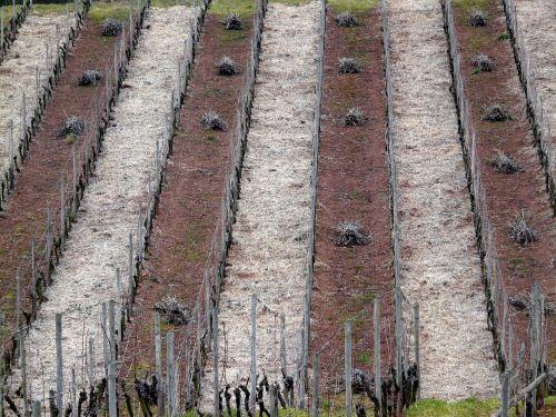 vynuogynas, struktūra, vynuogynas žiemą, vynuogynai, vyno regionas, gamta, serijos, vynuogių auginimas, vynmedis